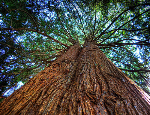 3 Reasons Why Western Red Cedar is Your Friend