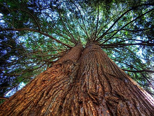 Western Red Cedar - Summerwood Products